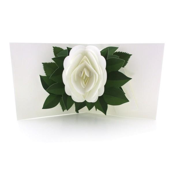 Pop-up-Karte mit einer weißen Rose
