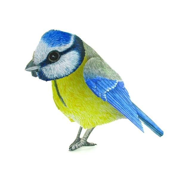 3D-Tierkarte Blaumeise