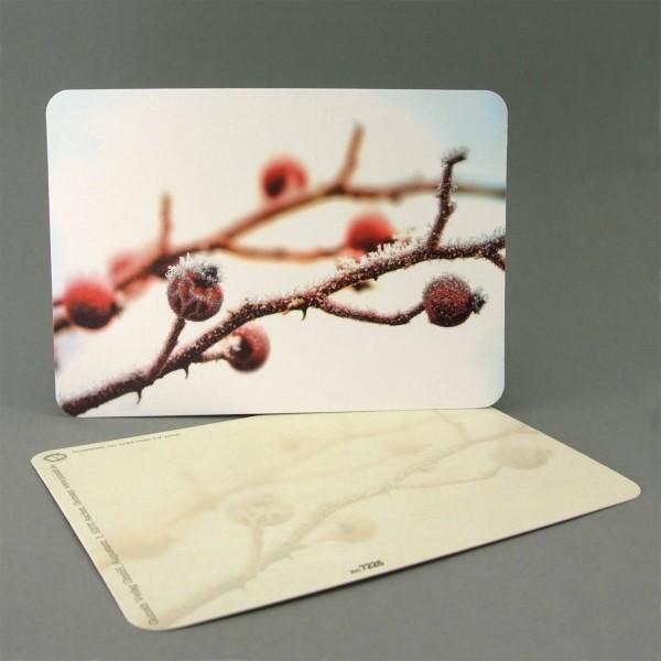 Postkarte Hagebutten