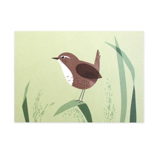 Postkarte Zaunkönig