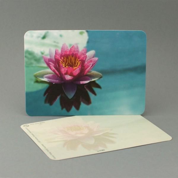 Postkarte Seerose