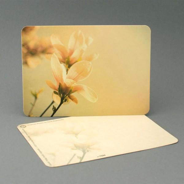 Postkarte Magnolienblüten