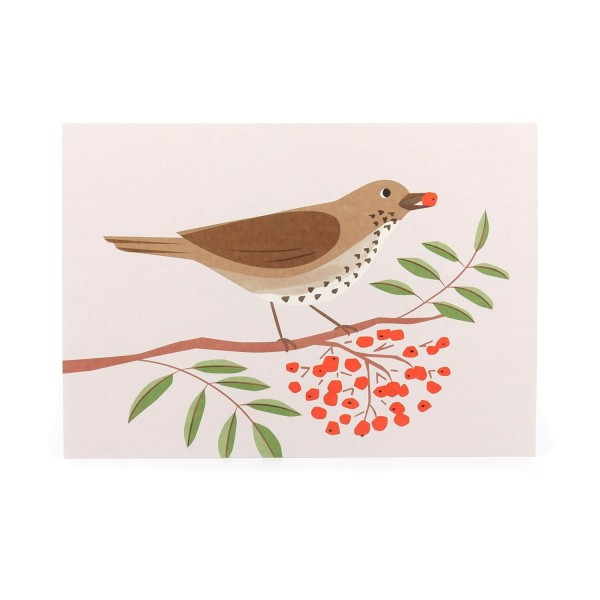 Postkarte Singdrossel