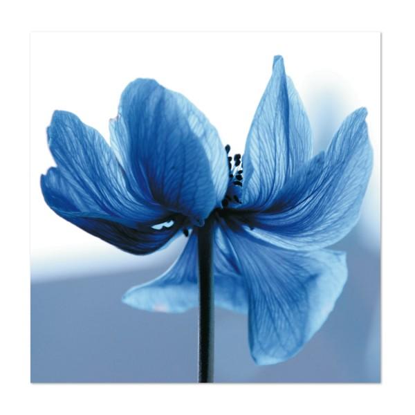 Klappkarte Blaue Blume